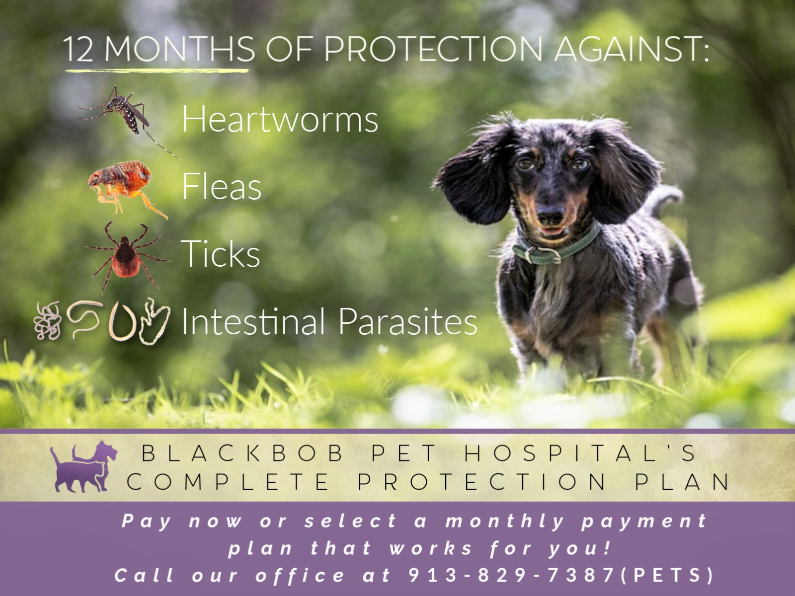 Complete Protection Program for Dogs
